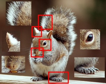 Image Correlation of a Squirrel